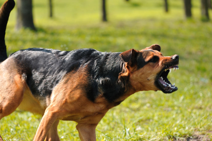 Dog training for aggressive dogs seattle