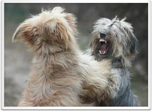 Lessons for Dogs with Aggression Issues