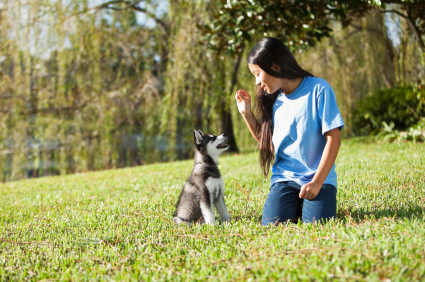 Girl training puppy