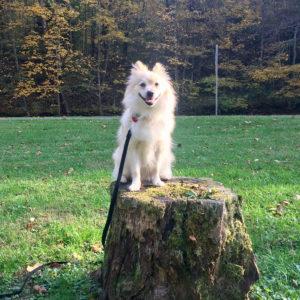 Training 301: Intermediate Obedience - Seattle Family Dog Training